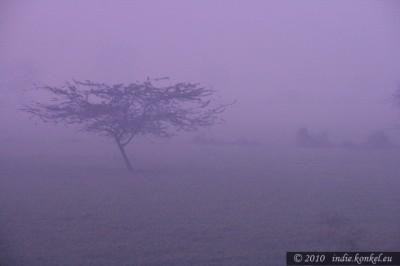 Ktoś widział takie mistyczne drzewo?