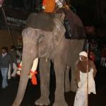Słusznych rozmiarów słoń