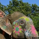Indie2010_1675
